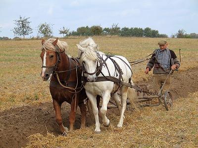 Farmer plowing fallow ground